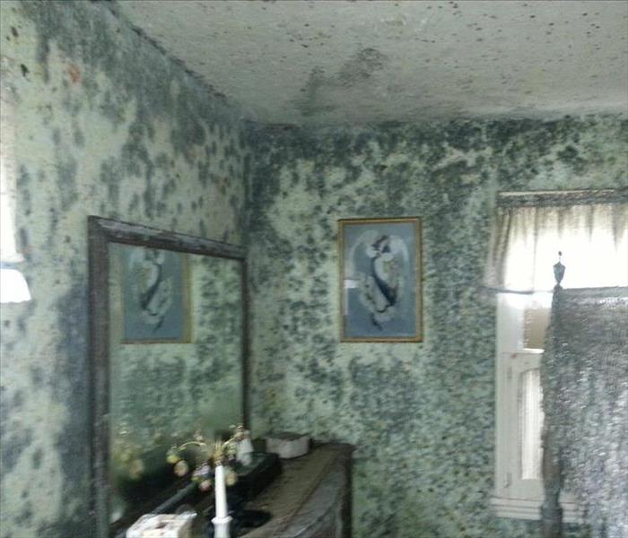 Mold Damage in Rochester NY
