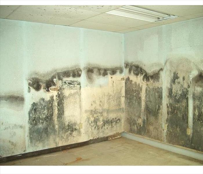 Mold covering 2 walls in a corner of a room