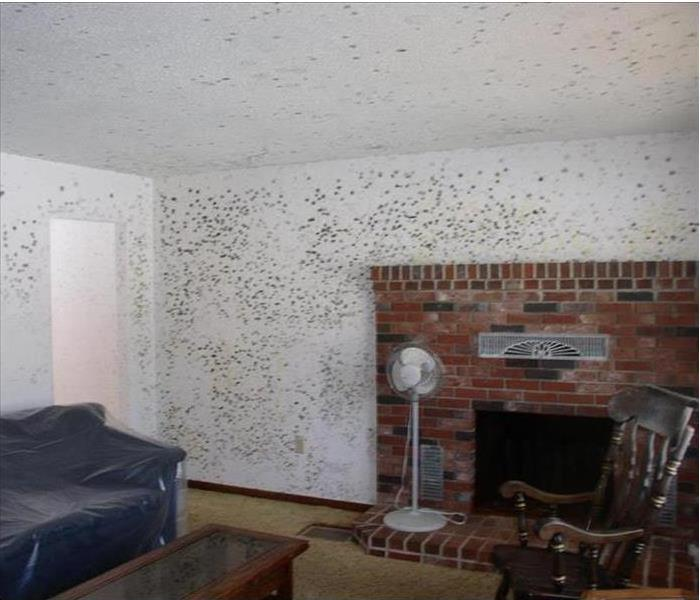 Mold Remediation Does your Rochester Home have a Mold Problem?