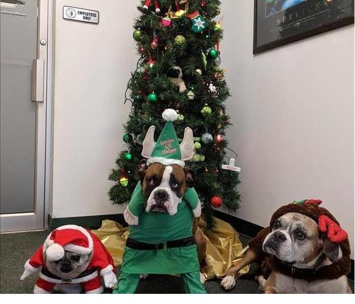 3 Dogs under a Christmas tree